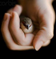 sparrow hand