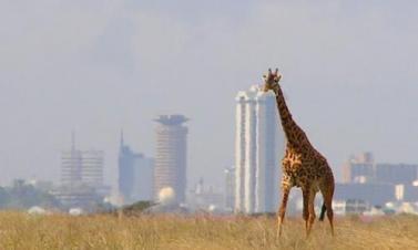 Nairobi National Park_0_0.jpg